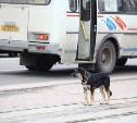 В России собираются на федеральном уровне запретить убийство бродячих животных