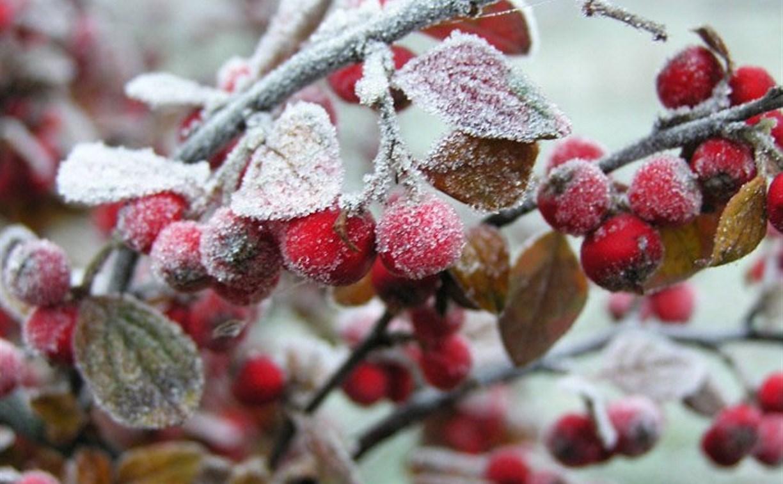 Погода в Туле 2 ноября: похолодание, облачно и без осадков