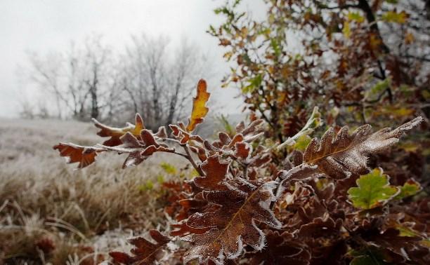 Погода в Туле 21 сентября: утренний мороз, дождь и ветер
