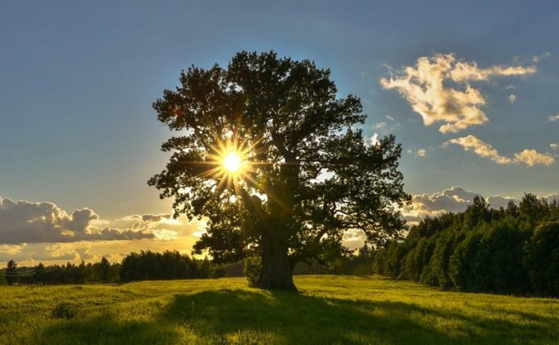 Национальный парк «Тульские засеки» в регионе просят создать  Алексея Дюмина
