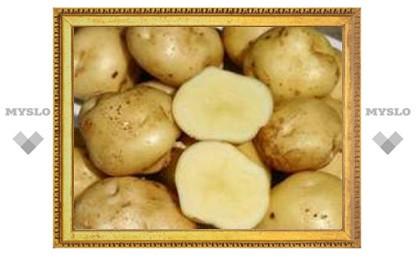 2008 год - Международный год картошки