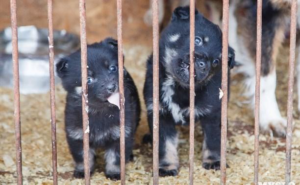 Приют для животных «Любимец» приглашает туляков на день открытых дверей и субботник