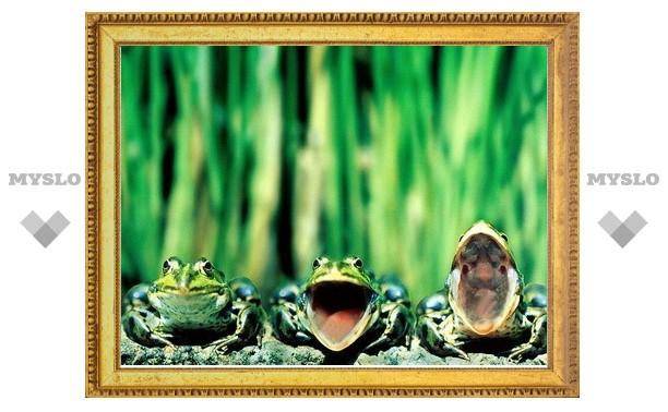 Экзотариум готовит выставку рептилий и амфибий