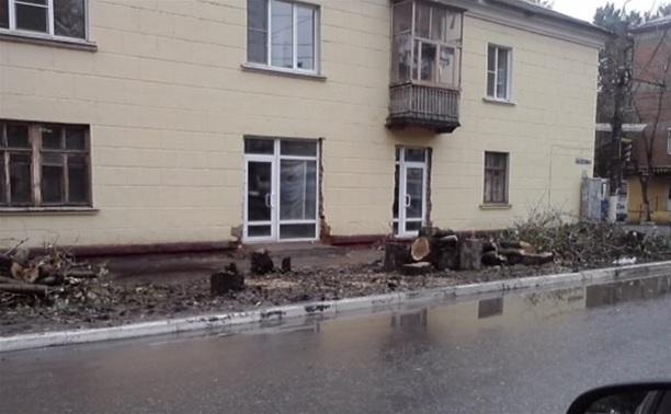 Частный предприниматель незаконно вырубил деревья на ул. Оружейной
