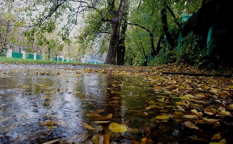 Погода в Туле 24 сентября: осень!