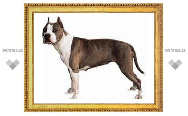 Внимание! В Туле найдена собака!