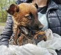 Туляки спасли погибавших в битуме щенков: видео