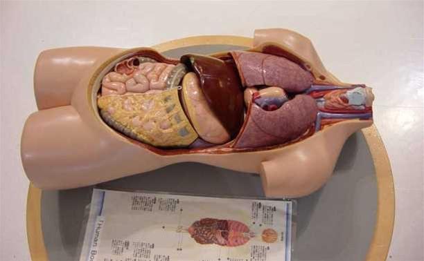Человеческие органы будут передаваться по завещанию