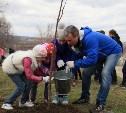 На субботнике в Туле высадят более 100 деревьев