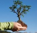 4 ноября на Куликовом поле высадят 2500 молодых деревьев