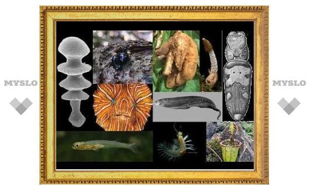 Ученые выбрали 10 главных открытий в мире живых существ