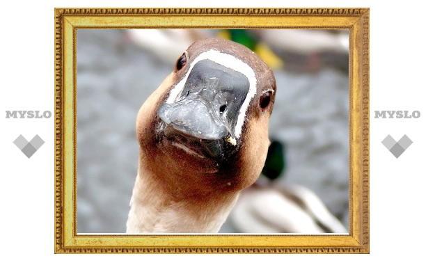 По делу о взятке в 40 миллионов задержали живого гуся