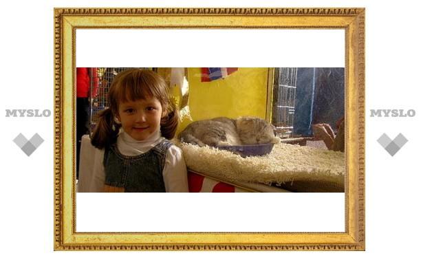 В Туле выберут лучшую кошку