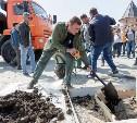 На Тульской набережной высадили 46 кленов