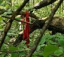 Корреспондент Myslo нашел в лесу останки женщины