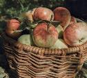 Ресторатор Аркадий Новиков и потомок великого писателя Илья Толстой прорекламировали тульские яблоки