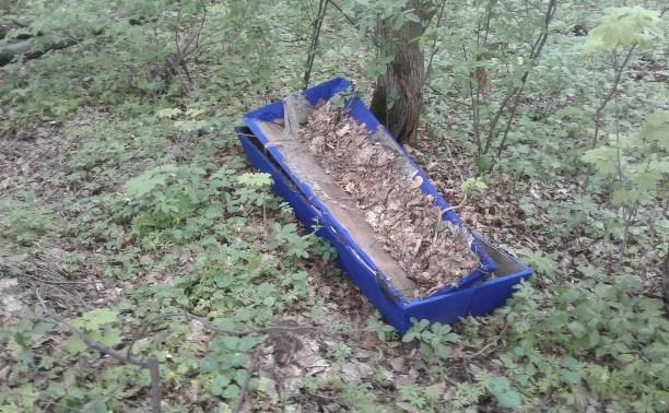 Туляк обнаружил в лесополосе рядом с кладбищем выброшенные гробы