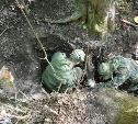 Тульские поисковики обнаружили в корнях дерева останки солдата