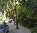 В Туле снова деревья закатали в асфальт