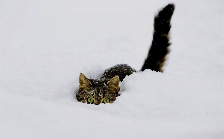 Погода в Туле 10 февраля: потепление и небольшой снег
