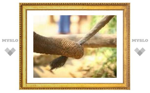 В Азии родился первый слон из пробирки