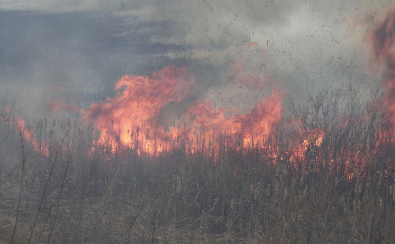 В тульском Мясново возле гаражного кооператива загорелось поле