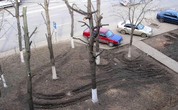 Прокуратура выявила многочисленные нарушения в кронировании деревьев в Туле