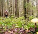 В Тульской области пропавшего грибника нашли мертвым в лесу