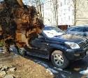 В Туле на проспекте Ленина Land Cruiser придавило деревом