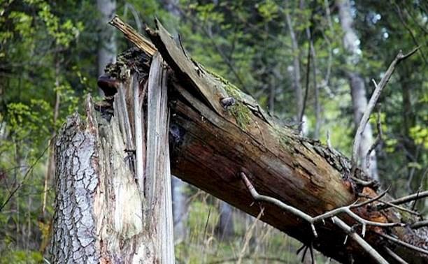 Туляк подал в суд на администрацию города за машину, раздавленную упавшим деревом