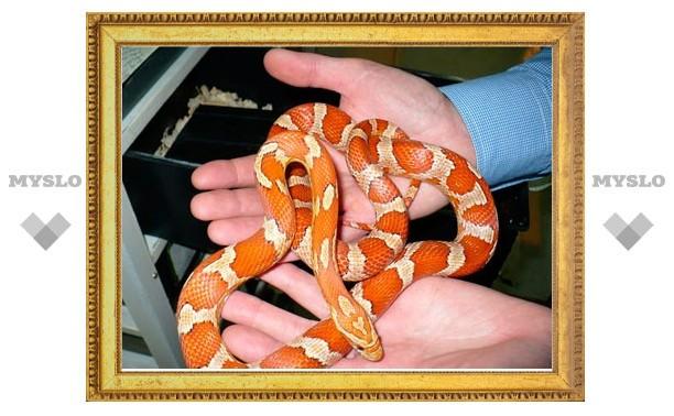 В тульском экзотариуме День змей