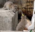 В Туле зафиксировали 9 случаев геморрагической лихорадки