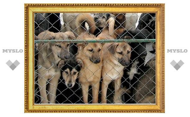 В Туле построят приют для собак