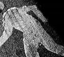 В Маслово неизвестный водитель сбил женщину и скрылся