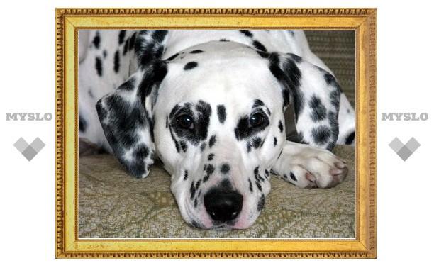 В Туле собака ищет хозяина
