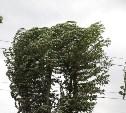 В Тульской области из-за сильного ветра объявлен оранжевый уровень опасности