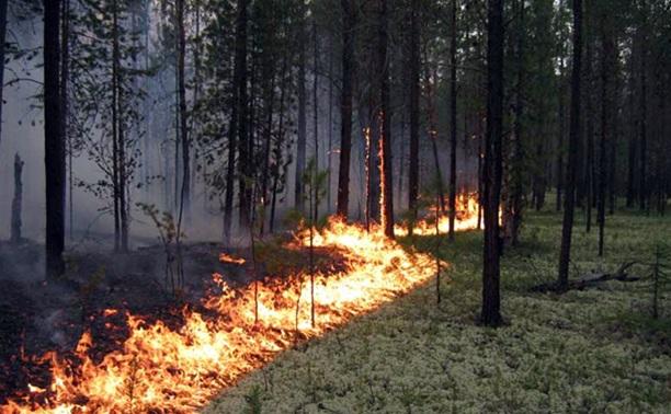 В Тульской области проверят, как используют технику для тушения лесных пожаров
