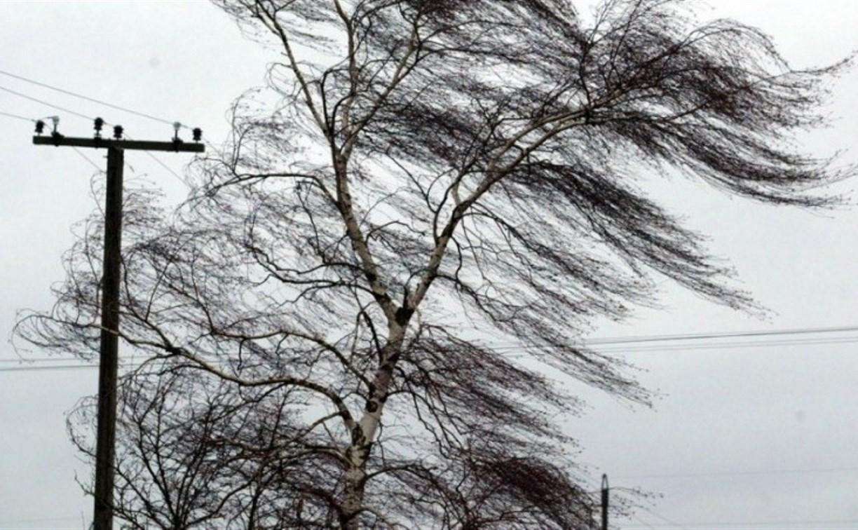 Метеопредупреждение: В Туле вновь усилится ветер