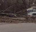 В Новомосковске шквалистый ветер повалил дерево рядом с детской больницей