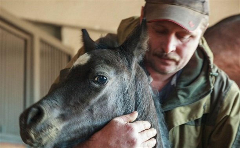 «Куликово поле» объявляет конкурс на лучшее имя для маленькой лошадки