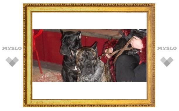 В Туле проходит выставка собак