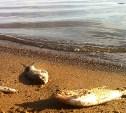 В Пронском водохранилище гниет рыба