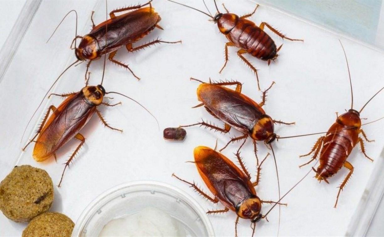 В Веневе суд закрыл продуктовый магазин из-за тараканов в торговом зале