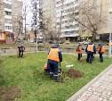 В Туле продолжаются работы по озеленению территорий