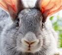 В Кимовском районе задержан серийный похититель кроликов