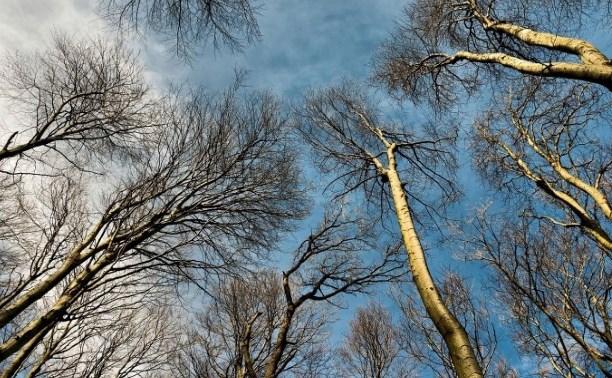 Погода в Туле 15 марта: до +2, без осадков и легкий ветер