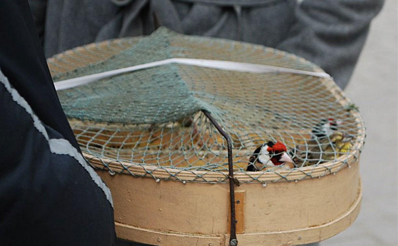 Тульские экологи обсудят, как защитить птиц в Благовещение
