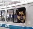 Полицейская собака помогла задержать карманницу