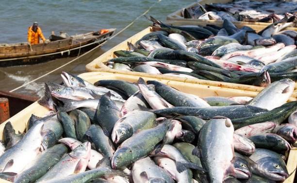 В Тульскую область будут поставлять рыбу и морепродукты с Сахалина