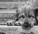 Тульская облдума просит Госдуму ускорить принятие закона об ответственном обращении с бездомными животными